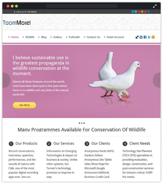 ToomMorel - Beautiful Responsive WordPress Themes