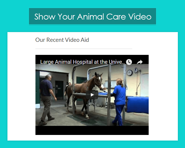Video Section-pet-animal-veterinary-wordpress-InkTheme